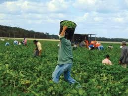 Lanzaron libro sobre Agricultura y la perspectiva del Cono Sur