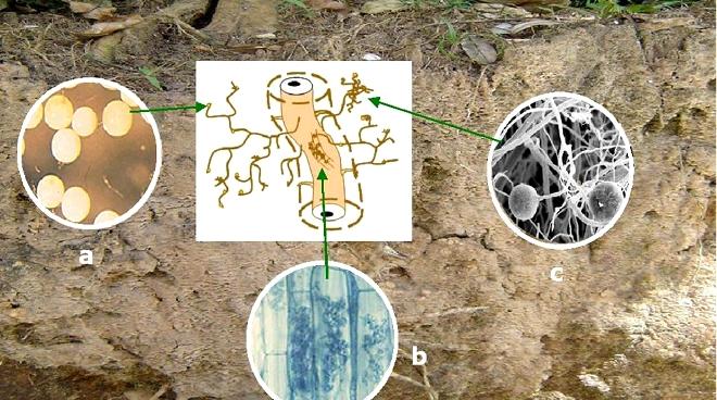 Consorcios microbianos y bio-control equilibrado de plagas y enfermedades