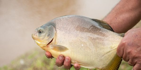 Encaran el desafío de producir los peces que demanda el mundo