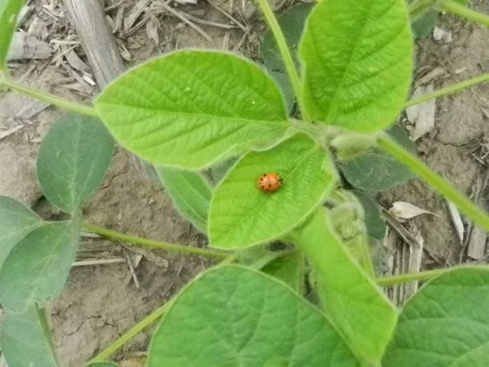 Modernos insecticidas con persistencia y cuidado de la fauna benéfica