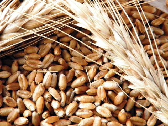 El trigo lidera en el mercado de granos local