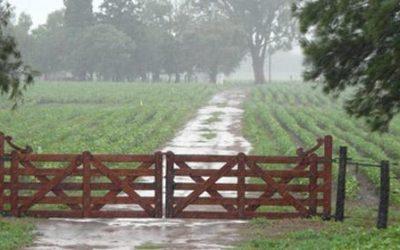 Prevén ascenso térmico, con lluvias sobre noreste y centro-este del área agrícola