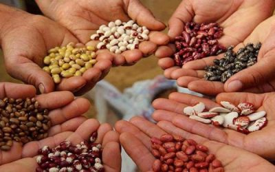 El INASE continúa con controles del uso de semillas en la presente campaña agrícola