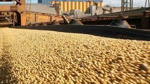 El procesamiento de oleaginosas seguiría estancado en Argentina