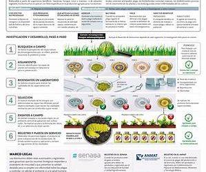Herramientas biotecnológicas para una producción agropecuaria más sustentable