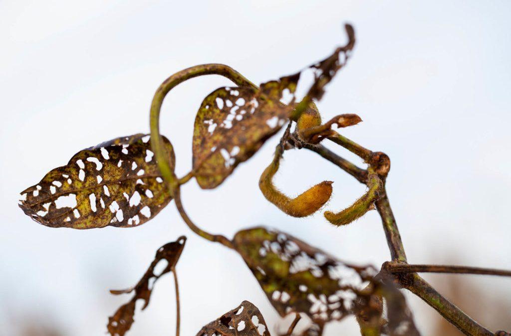 Los científicos advirtieron que este herbicida destruiría las cosechas, EPA lo aprobó de todos modos