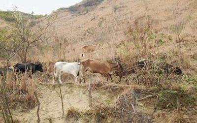 Misiones afronta situación crítica en ganadería con índices de producción más bajos del país