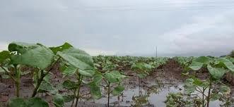 Las lluvias se desplazarán hacia el norte en lo que resta de la semana