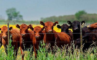 Luego de 17 años, Argentina volverá a exportar carne bovina a Estados Unidos