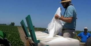 Fertilizar en soja y maíz se volvió hasta 25 % más caro, según la Bolsa de Cereales de Córdoba