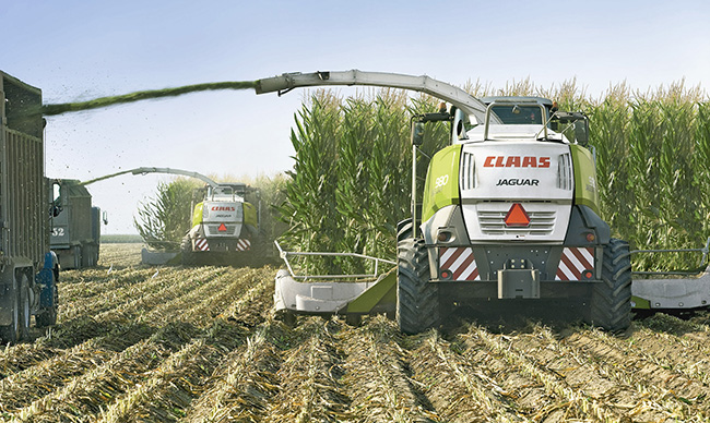 Las reservas de alimentos para ganado en silos se deteriora más del 20%