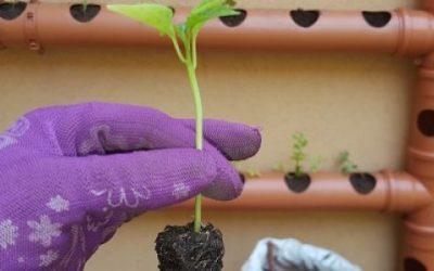 Huertas urbanas: producir en casa beneficia a la salud y al ambiente