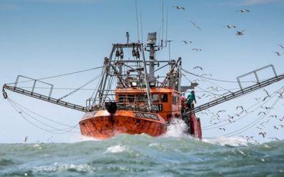 El consejo Federal Pesquero estableció los permisos de captura máxima en 2019