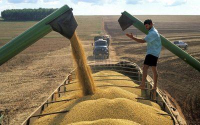 El precio de los granos gruesos,a la espera de datos claves