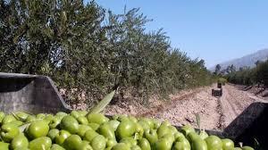 Solicitan la declaración de emergencia agropecuaria para Catamarca