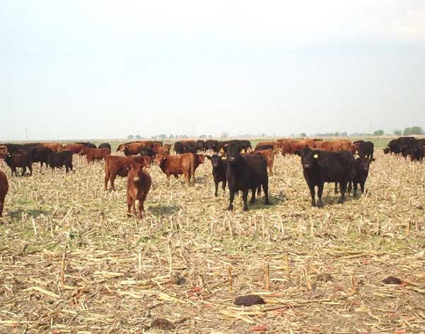El pastoreo de otoño en este estudio no afectó negativamente ninguna de las características de la estructura del suelo en relación con los controles.