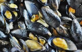 Restablecen la extracción de moluscos bivalvos y  gasterópodos en la costa bonaerense