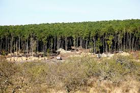Plan Agroforestal: extiende plazo a productores para presentar las declaraciones juradas