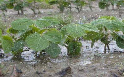 En 9 días, el 22% de la región pampeana recibió lluvias que superan la media de todo diciembre