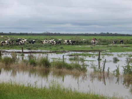 Agricultura y ganadería en gran parte de la zona más productiva están a tiempo de prevenir
