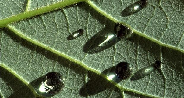 Tratamientos de estimulación fisiológica con extractos naturales de origen vegetal en soja