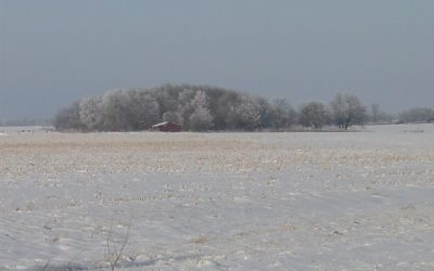 El trigo sube impulsado por el frío de EE.UU