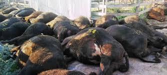 Por la ola de calor, murieron 100 animales en el Mercado de Liniers