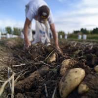 Finalizó la primera etapa de capacitación en Buenas Prácticas Agrícolas para la producción de frutas y hortalizas