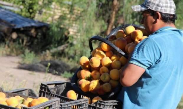 Homologaron la emergencia agropecuaria en casi toda la provincia de Mendoza