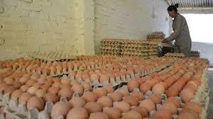 Decomisan 3.600 docenas de huevos en Neuquén