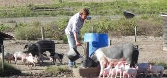 Preocupa el abandono de la actividad de muchos pequeños productores porcinos