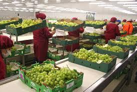 Ingresaron 1.040 millones de dólares de la agroexportación en el último mes
