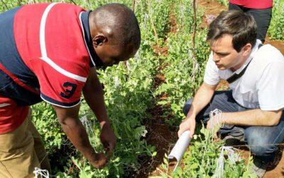 Venderán inoculantes a pequeños productores de Tanzania en cooperación con una fundación de Bill Gates