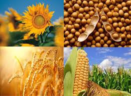 Los sectores del agro de exportación e industrial compraron 25.7 millones de toneladas de granos