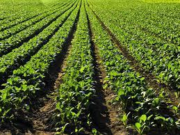 Con mejor condición, la soja alcanzaría 19 millones de toneladas en la zona núcleo