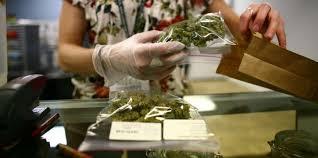 Autorizan a cultivar Cannabis medicinal en una localidad de Jujuy