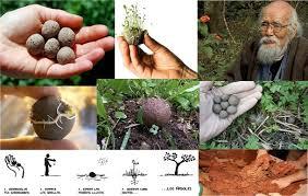 Nendo Dango: Con bolitas de arcilla, las siembras son mil % más efectivas