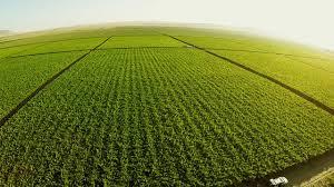 En la Patagonia también hay agricultura