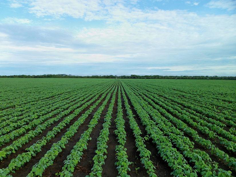 Un número muy pequeño de cultivos domina en todo el mundo: son malas noticias para la agricultura sostenible