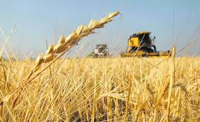 El trigo nuevo va por 7 M de ha, el maíz rompe la barrera de los 50 Mt, pero la soja cae medio Mt