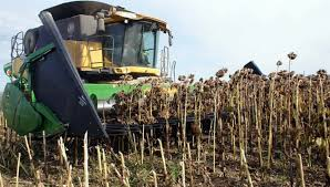 Las cosechas de maíz y girasol avanzan con fluidez en el país