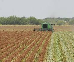 Pese a las lluvias, continuó la cosecha de la gruesa en el país