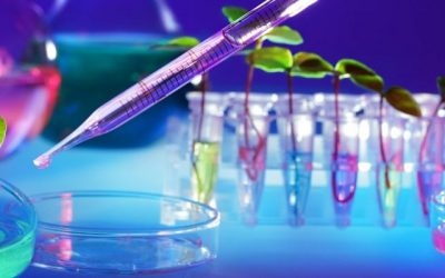 Quiénes son las 5 científicas argentinas que están cambiando la salud de los humanos y del planeta