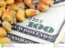 El maíz contractual captura el interés de los operadores y se abren las primeras ofertas por el cereal 19/20