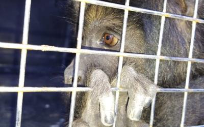 Alientan a denunciar tráfico ilegal de la fauna silvestre en la Provincia de Buenos Aires