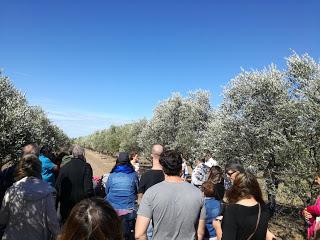 El aceite de oliva fue el protagonista del fin de semana