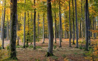 Alianzas locales planta-microbios dan forma a biomas globales