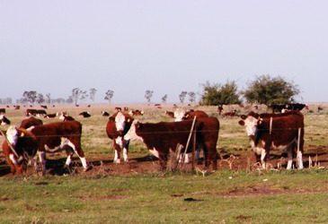 Agroindustria difundió el informe sobre stock bovino