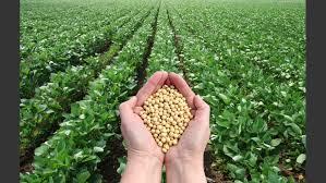 Ya se compraron 5.9 millones de toneladas de granos de la campaña 2019-2020