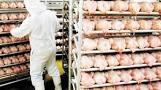 El pollo es el complemento ideal para incorporar minerales esenciales